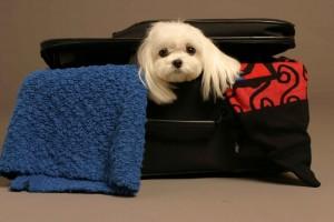 Nuestras mascotas también quieren acompañarnos en nuestros viajes