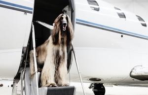 Viajar a Alemania con mascotas