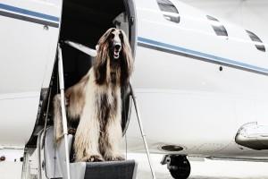 mascotas-en-el-aeropuerto