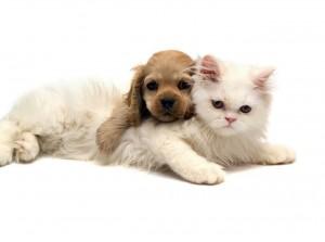 El perro y el gato son dos de las mascotas que pueden ingresar a Alemania