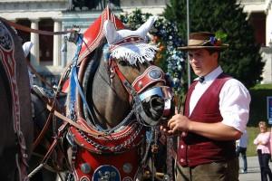 Cochero preparando a su caballo para desfile en Oktoberfest.