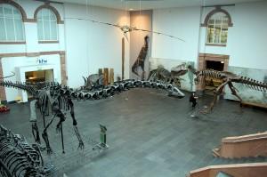 Interiores del Museo de Historia Natural.