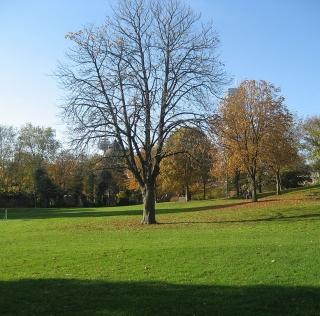 Klingelpützpark - autor