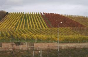 Producción de uvas