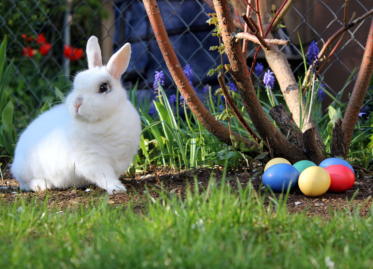 Tradiciones de semana santa en alemania guia de alemania for El conejo de pascua